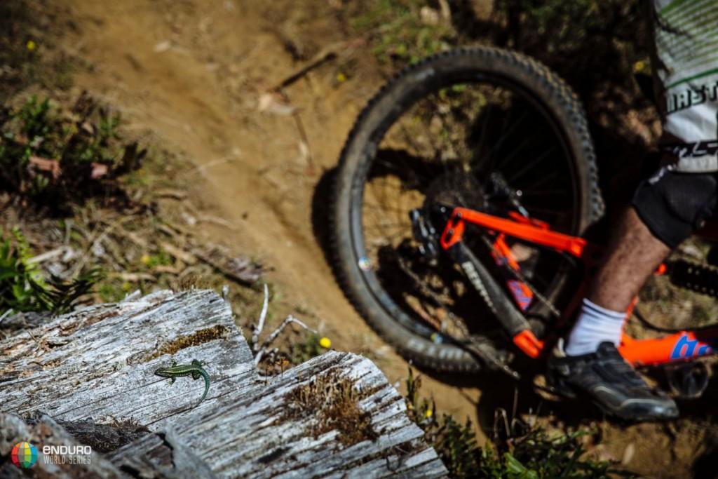 La vida salvaje de la zona, testimonio del paso de los riders. Foto Duncan Philpott