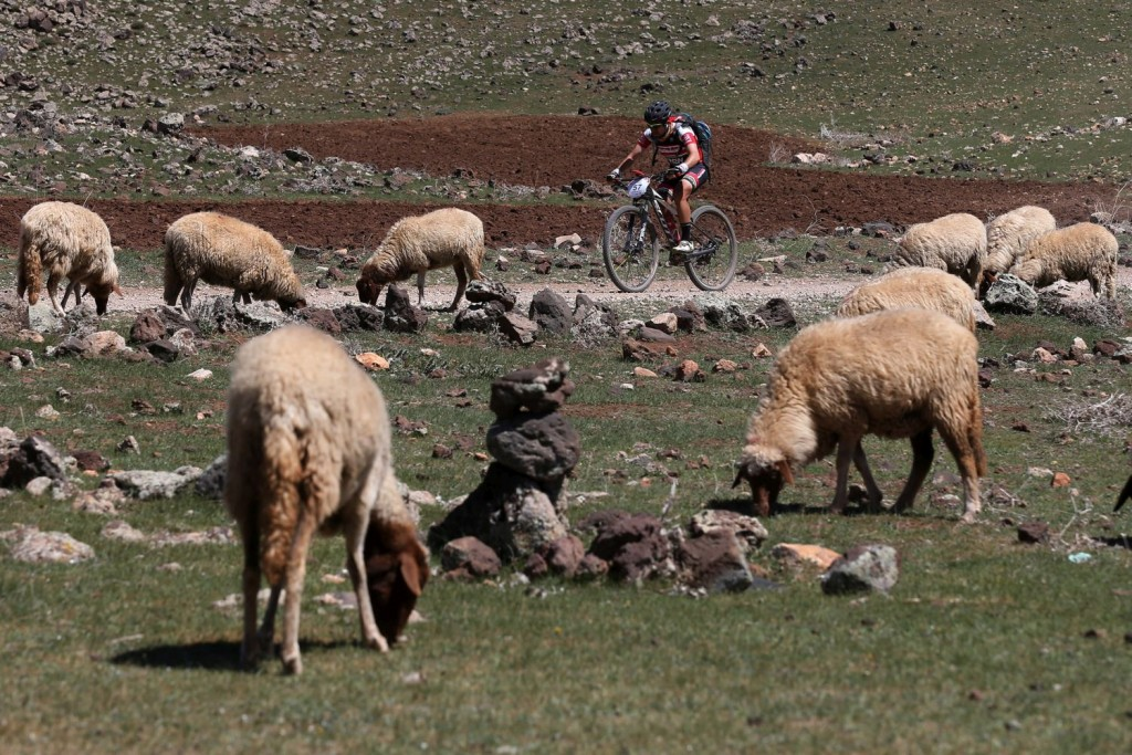 De las ovejas a los camellos, será el contraste que ofrecerá la Titan Desert.