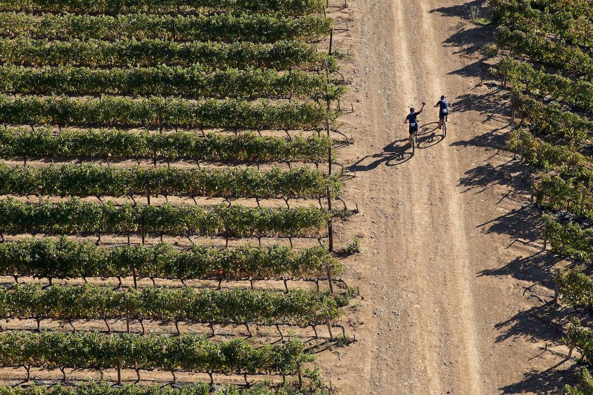 Viñedos, no pueden faltar en la carrera. Foto Greg Beadle/Cape Epic/SPORTZPICS